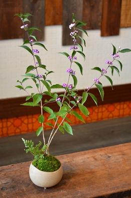 盆栽の新入荷のご案内_d0263815_1735241.jpg