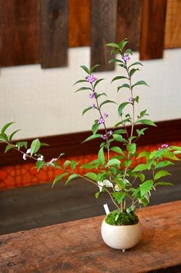 盆栽の新入荷のご案内_d0263815_1757686.jpg