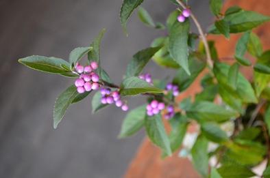 盆栽の新入荷のご案内_d0263815_17583932.jpg
