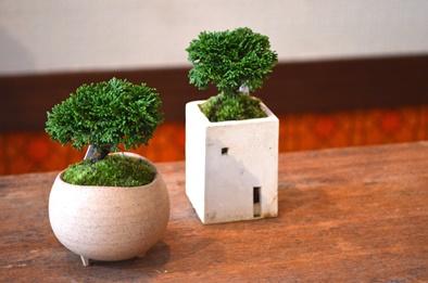 盆栽の新入荷のご案内_d0263815_1853469.jpg