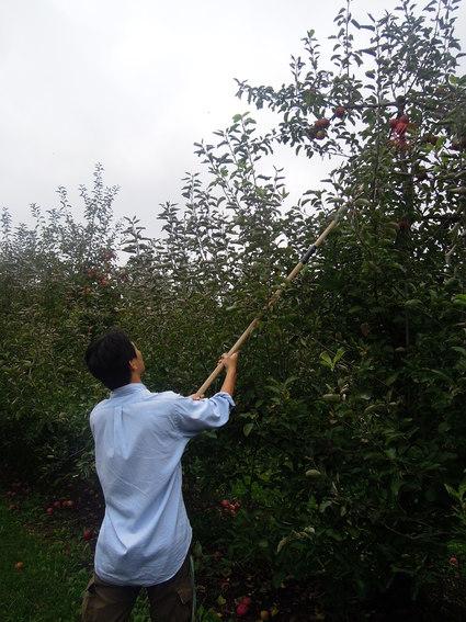 Apple Picking!_f0208254_13291245.jpg