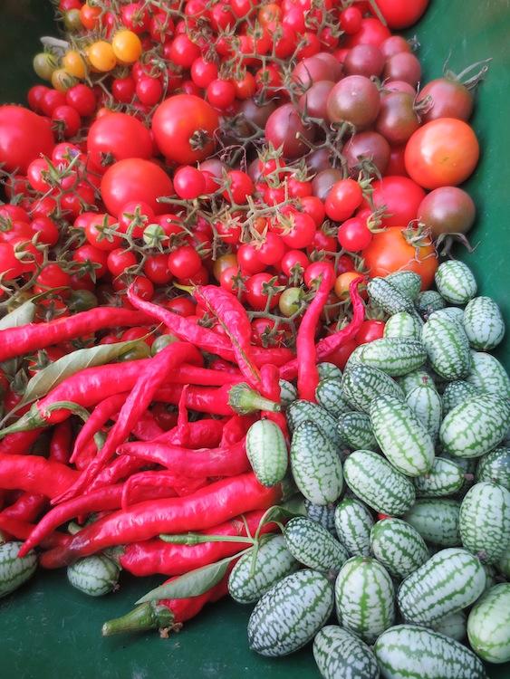 秋の収穫_d0231263_2259130.jpg