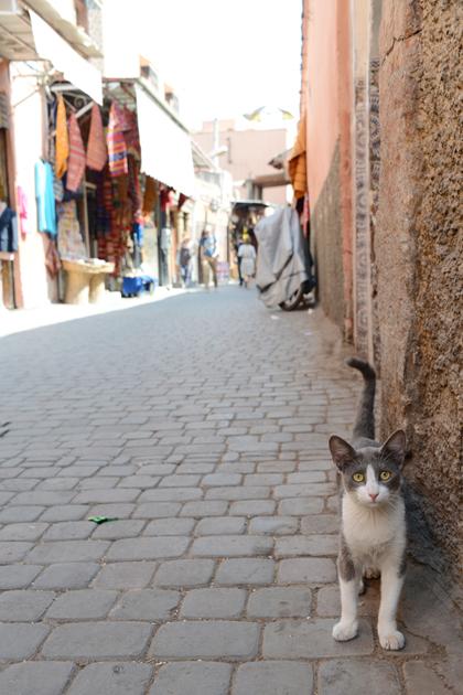 モロッコ猫写真_e0171573_23272068.jpg