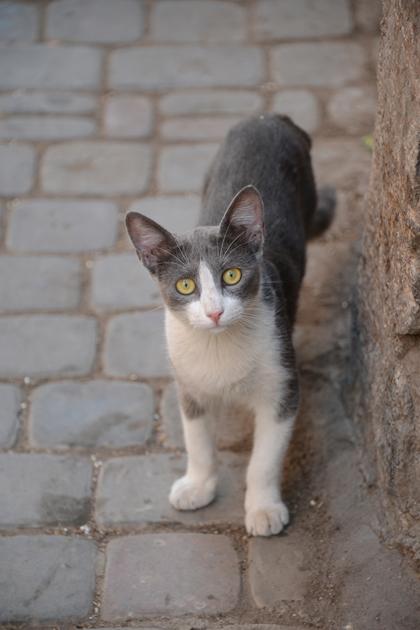 モロッコ猫写真_e0171573_2327356.jpg