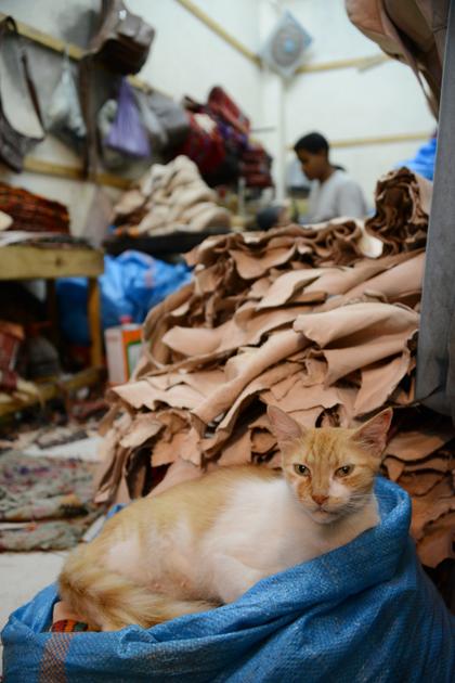 モロッコ猫写真_e0171573_23274027.jpg
