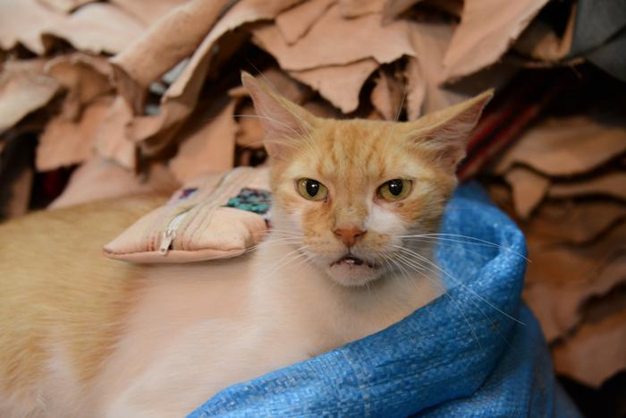 モロッコ猫写真_e0171573_232745100.jpg