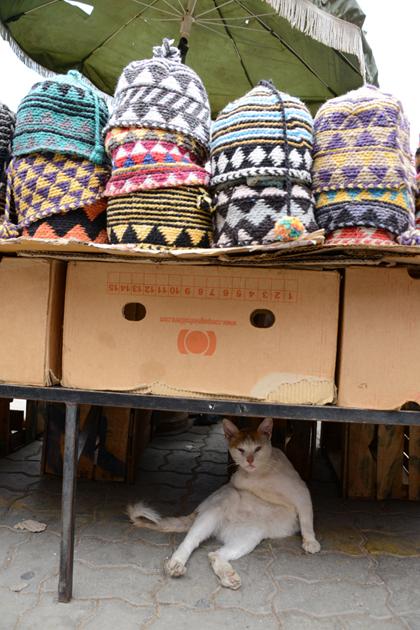モロッコ猫写真_e0171573_23275568.jpg