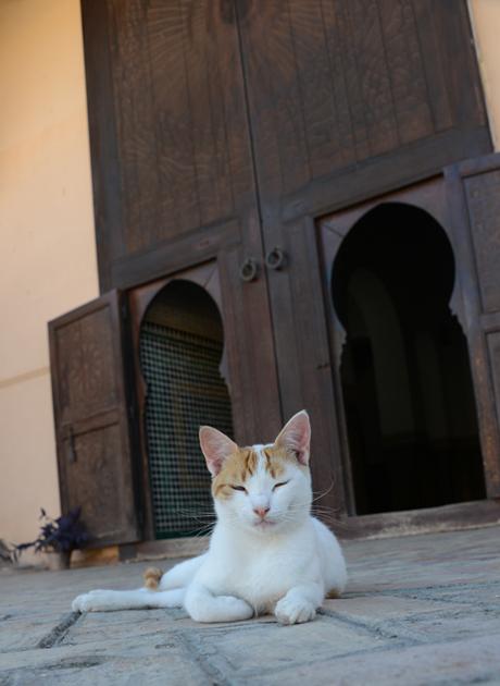 モロッコ猫写真_e0171573_2328115.jpg