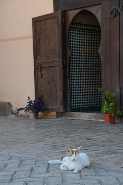 モロッコ猫写真_e0171573_23281340.jpg