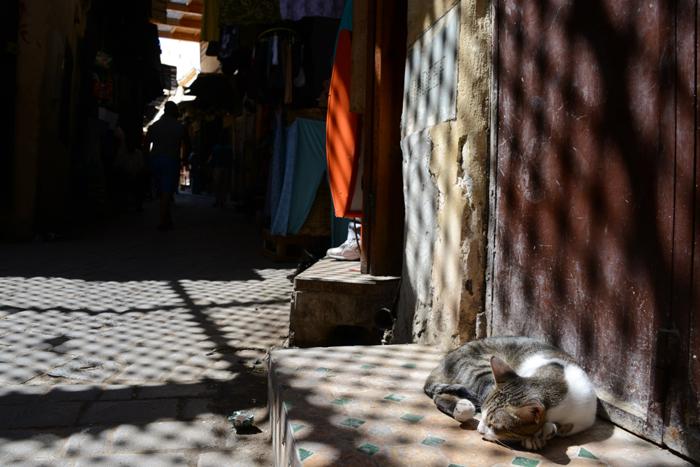 モロッコ猫写真_e0171573_23281775.jpg