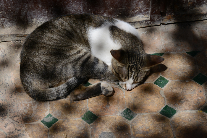 モロッコ猫写真_e0171573_23282459.jpg