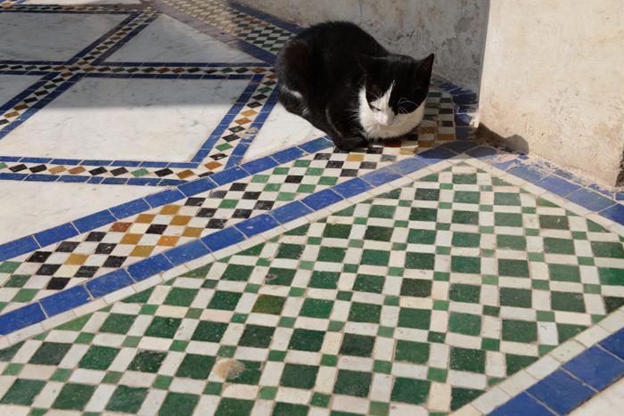 モロッコ猫写真_e0171573_23283032.jpg