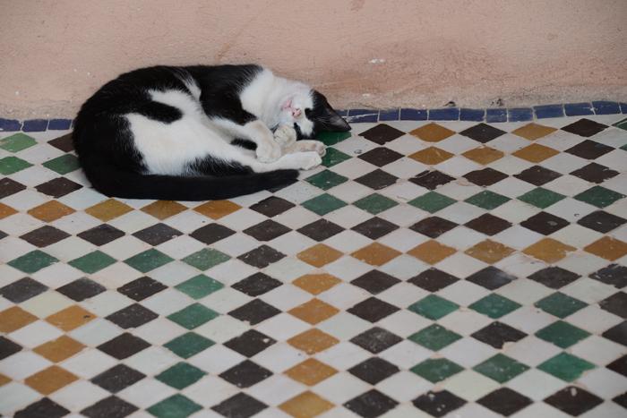モロッコ猫写真_e0171573_23283678.jpg