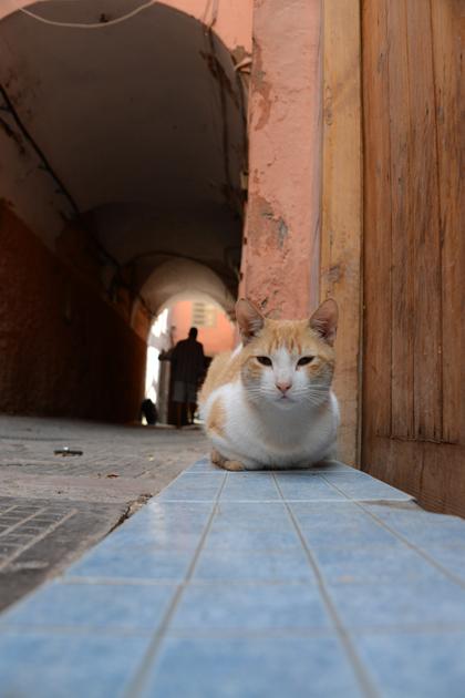 モロッコ猫写真_e0171573_23284225.jpg