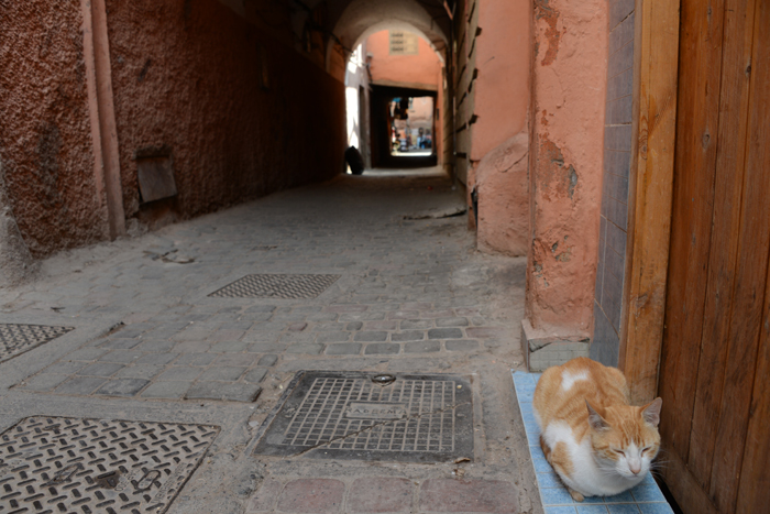 モロッコ猫写真_e0171573_2328475.jpg