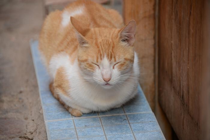 モロッコ猫写真_e0171573_23285723.jpg