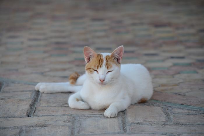 モロッコ猫写真_e0171573_2328651.jpg