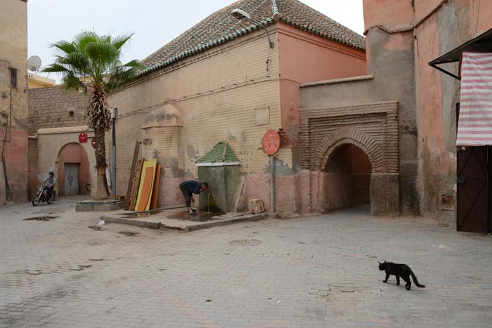モロッコ猫写真_e0171573_23292481.jpg