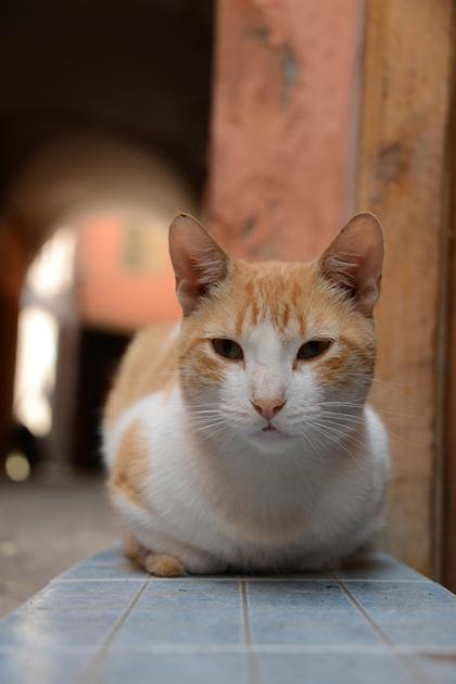 モロッコ猫写真_e0171573_2329485.jpg