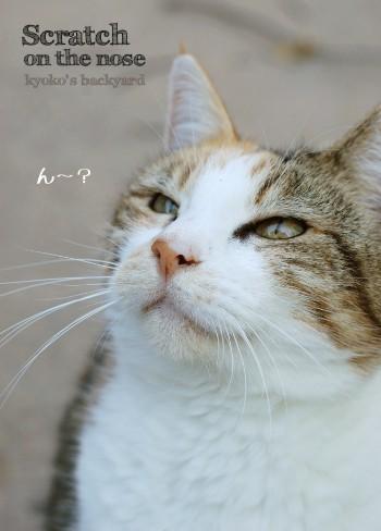 猫の勲章?_b0253205_354531.jpg