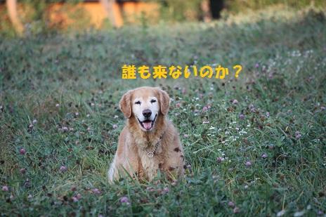 f0114128_1883058.jpg