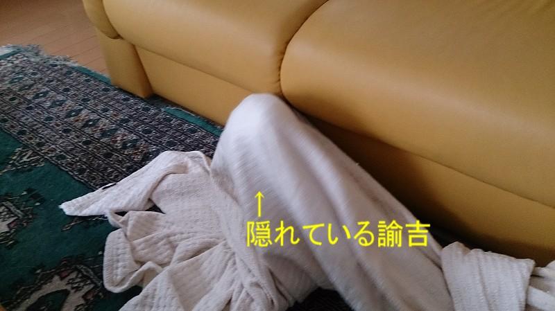 f0225750_17293678.jpg