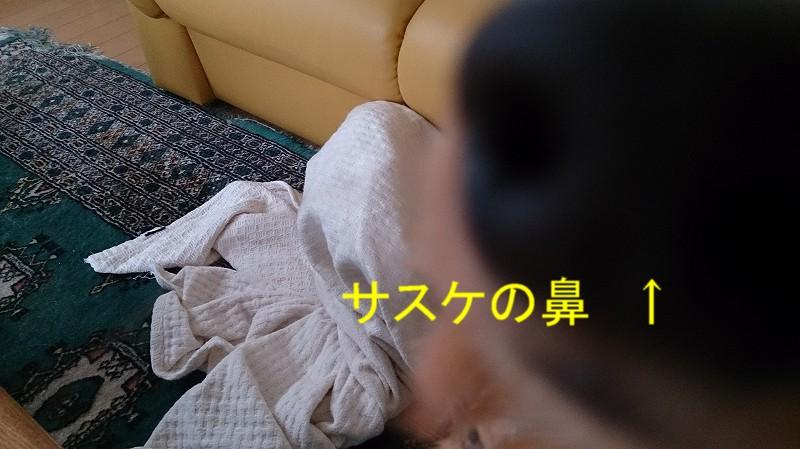 f0225750_17322943.jpg