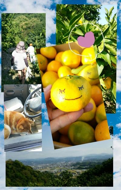 みかんの収穫!!_e0081959_226131.jpg