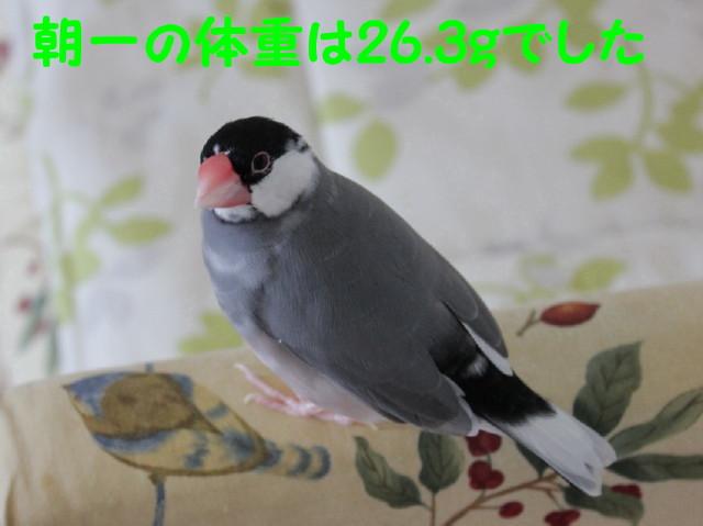 b0158061_22493762.jpg