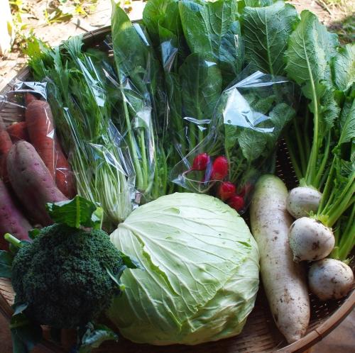 今週の野菜セット(10/15~10/19着)_c0110869_15265961.jpg