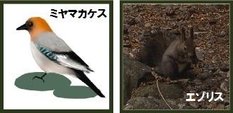 第2回アドベントカレンダー(20日目) 「ドングリと動物たち」_f0228071_1823655.jpg