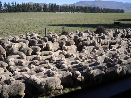 羊飼いの権利_e0232277_10255384.jpg