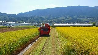 稲刈りを行いながら、色々な縁を思い浮かべ!_a0130305_1221567.jpg
