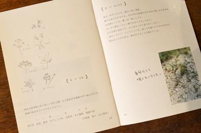 かわしまさんの小冊子のご紹介_d0263815_15111017.jpg