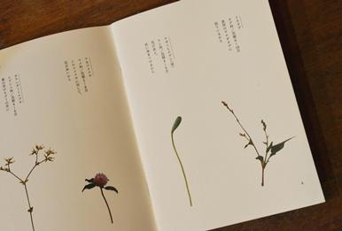 かわしまさんの小冊子のご紹介_d0263815_1533587.jpg