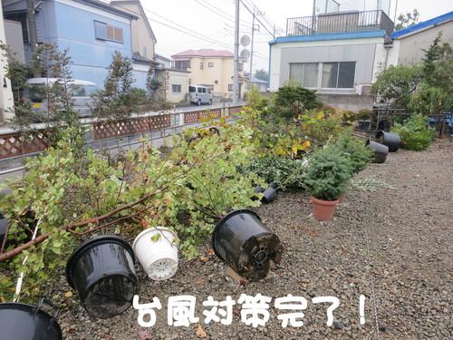 b0200291_20134949.jpg