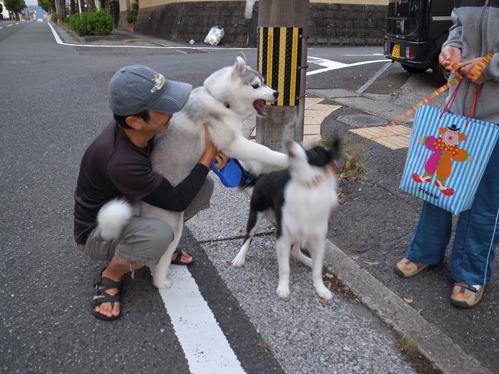 子犬 朝のあいさつ(10月14日朝)_c0049299_839393.jpg