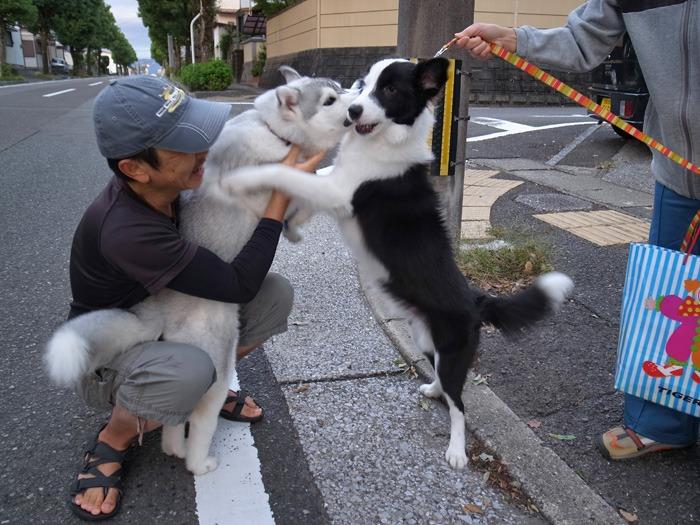 子犬 朝のあいさつ(10月14日朝)_c0049299_8411212.jpg