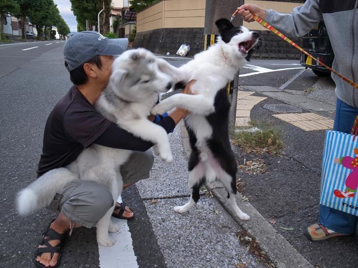 子犬 朝のあいさつ(10月14日朝)_c0049299_8414933.jpg