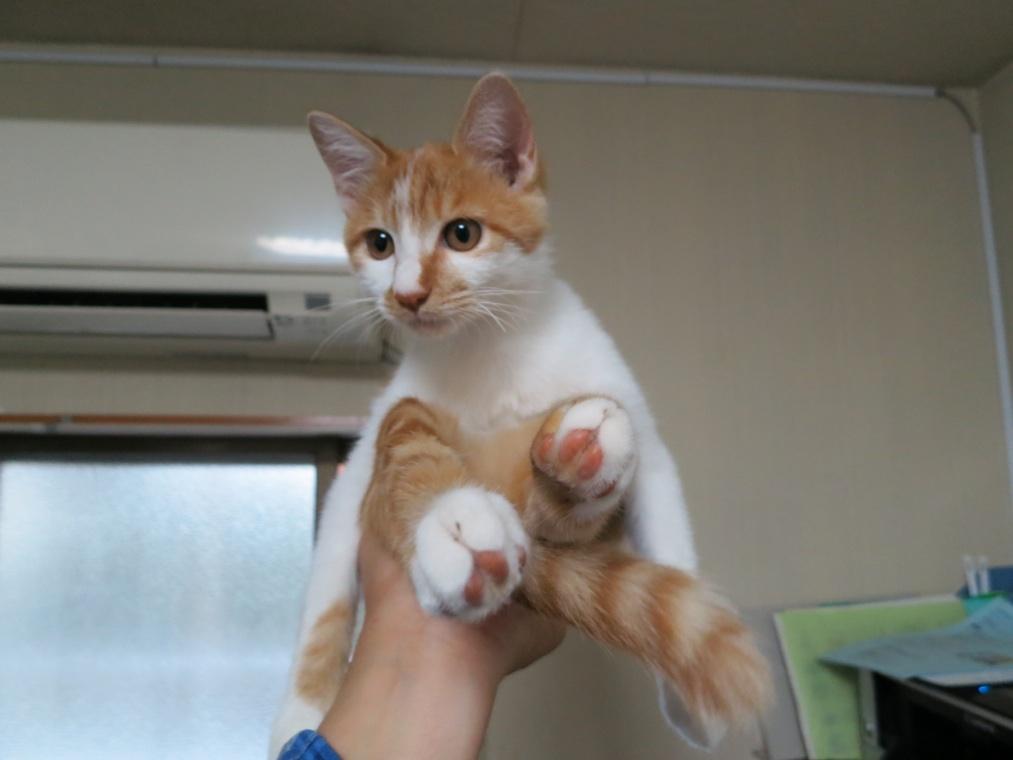 【猫】手乗り_f0141609_19242887.jpg