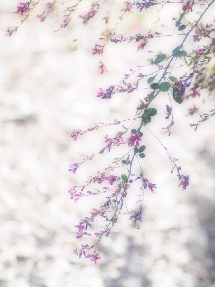 秋草の輝き_e0169421_22232456.jpg