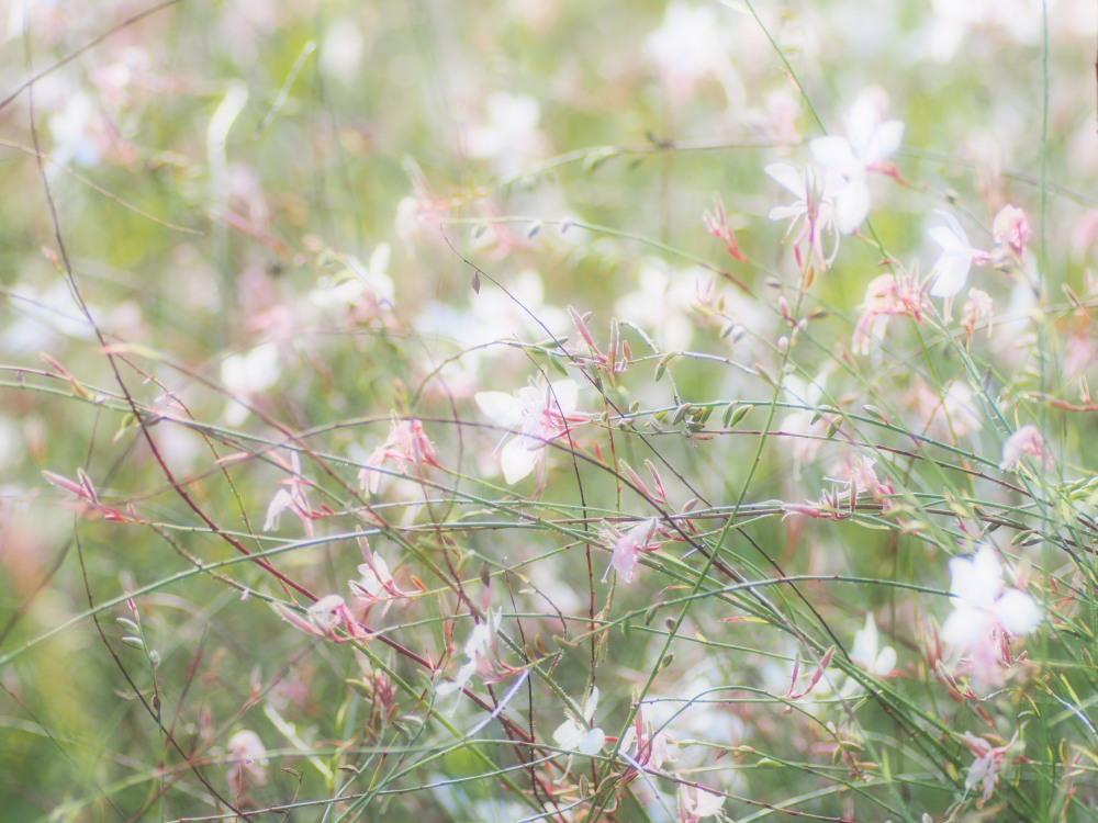 秋草の輝き_e0169421_22232753.jpg