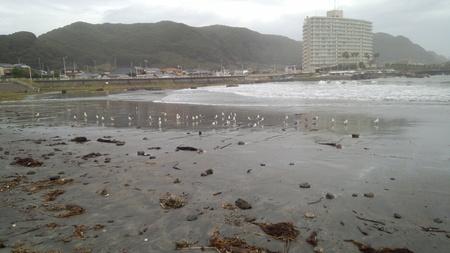海鳥たちも陸で一休み_e0327621_18322418.jpg