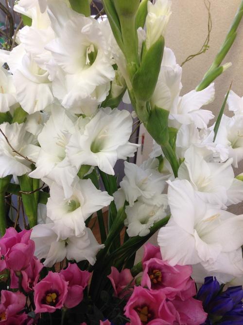 今週のお花とセール情報_a0200423_1251167.jpg