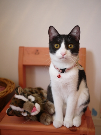 イリオモテヤマネコ猫 みるきぃ編。_a0143140_2194062.jpg