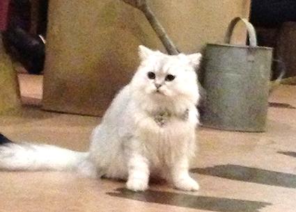 猫カフェ初体験_f0131668_2311595.jpg