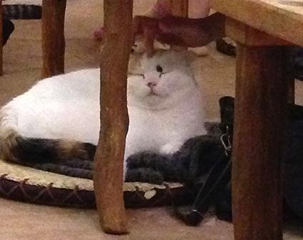 猫カフェ初体験_f0131668_23131884.jpg