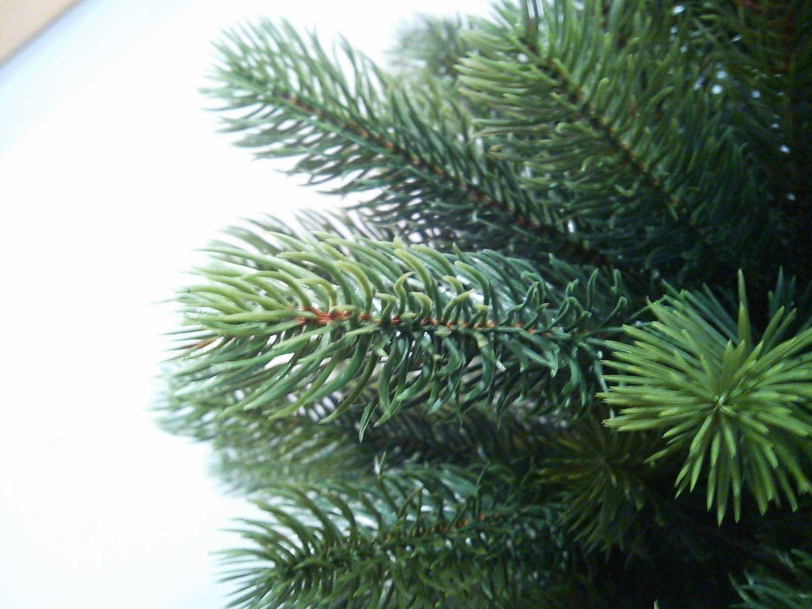 RS GLOBAL TRADE社のクリスマスツリーが入荷しました。_a0121669_1694626.jpg