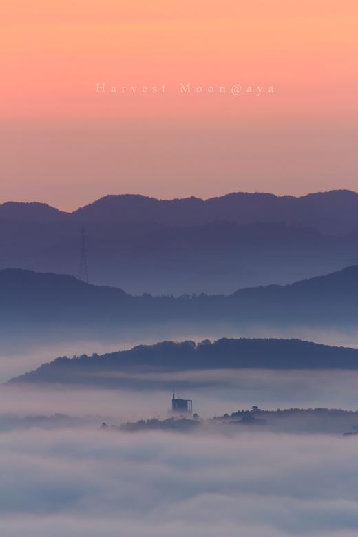 朝霧の神秘_b0208495_2393024.jpg