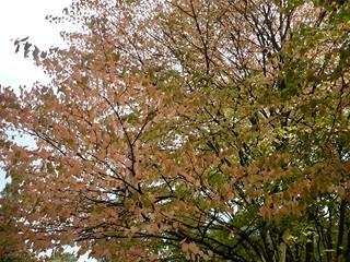 美しき秋の England_c0203401_12482282.jpg